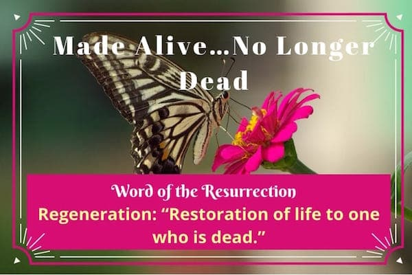 Made alive-no longer dead-regeneration-word of the resurrection
